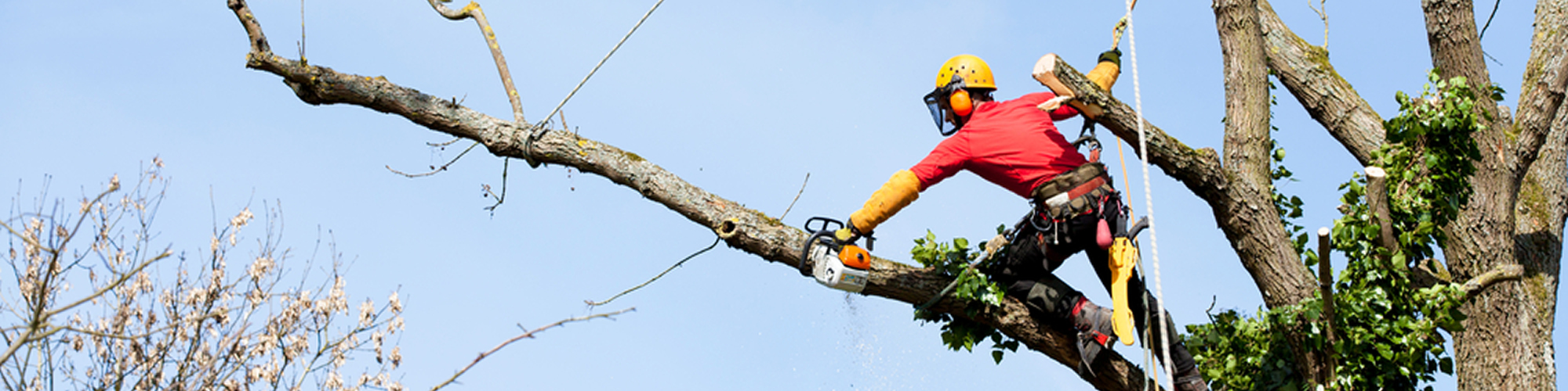 Bucks Tree Services - Tree Felling