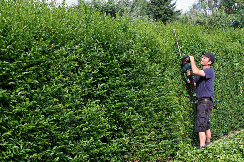 Bucks Tree Services - Hedge Trimming Buckinghamshire