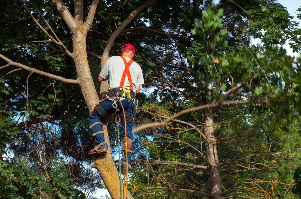 Bucks Tree Services - Tree Felling Buckinghamshire