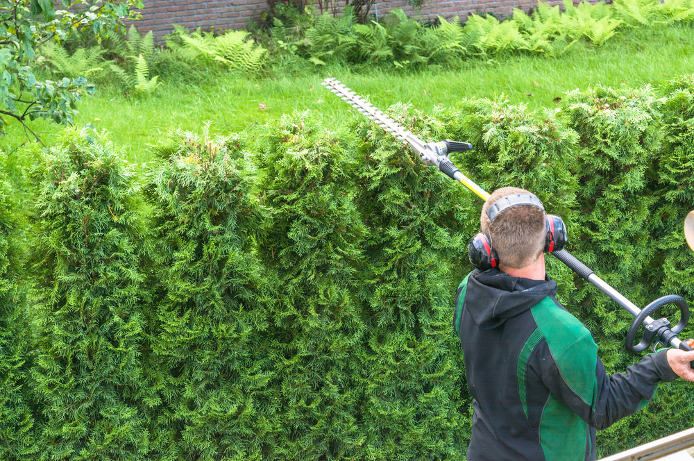 Bucks Tree Services - Hedge Trimming Oxfordshire, Tree Surgery, Buckinghamshire